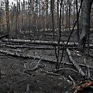 After the Fire by Aaron Bottjen