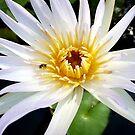 Lotus Visitor by Angelo Aguinaldo