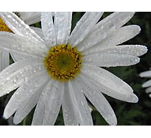 Morning Dew Photographic Print