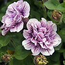 double petunias by Linda  Makiej