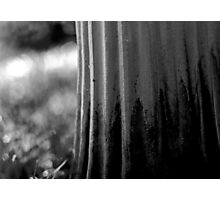 left to its own devices, the garden simply got on with it. Photographic Print