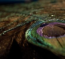 Peacock Feather 2 by njumer