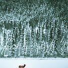 Lone Elk by Paul Grinzi