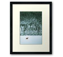 Lone Elk Framed Print