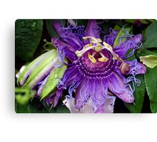 Caught in the tendrils Canvas Print