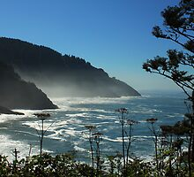 Misty Coast at Heceta Head by James Eddy