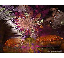 FLOWERS AND BUTTERFLIES SUMMER SOJOURN Photographic Print