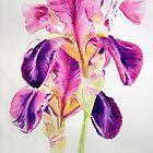 Glowing Irises by Ruth S Harris