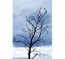 Crows Photographic Print