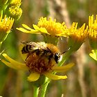 Little Bee and Yellow flowers by ienemien