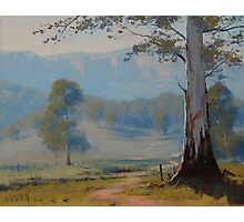 Valley Gum Tree Photographic Print