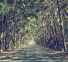 tree tunnel by Gregoria  Gregoriou Crowe