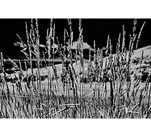 Infrared Photographic Print