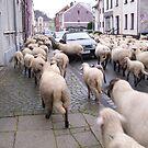 SHEPHERD AT WORK II by Heidi Mooney-Hill
