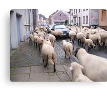 SHEPHERD AT WORK II Canvas Print
