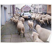 SHEPHERD AT WORK II Poster