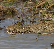 The crocodile's teeth by James Godber