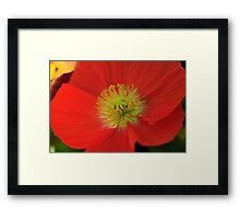 Perfect Poppy Framed Print
