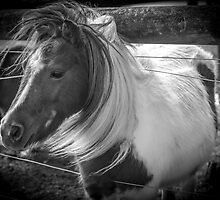 B&W Pony by Daniel Rankmore