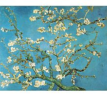 Vincent van Gogh, Blossoming Almond Tree Photographic Print