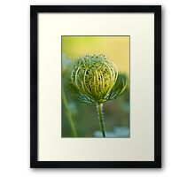 Nature's Abstract 3 Framed Print