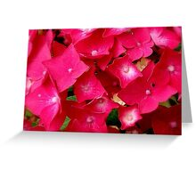 Pink Petal's... Greeting Card