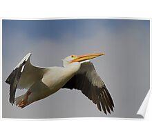 White Pelican Departure Poster