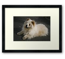 A cute little puppy Framed Print