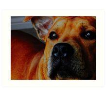 Staffordshire Bull Terrier. Art Print