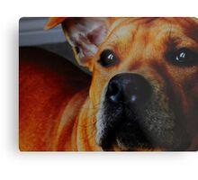 Staffordshire Bull Terrier. Metal Print
