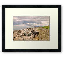 Tarn Goes To Walney Island Framed Print