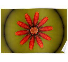 Nasturtium Flower Kaleidoscope Poster
