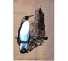 penguins win in the end Photographic Print