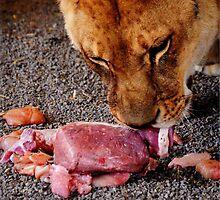 yummm meat by Kristen O'Brian