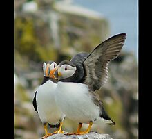 Puffin iPhone Case by Moonlake