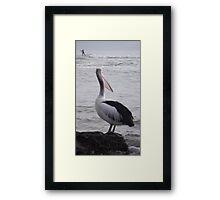 pelican watching the sea-paddler Framed Print