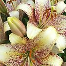 Lilies by Julie Van Tosh Photography