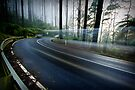 Moving through Time - Black Spur, Victoria, Australia by Sean Farrow