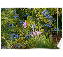 Blue and purple flowers Poster