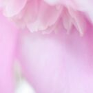 Soft edges of your petals by Softly
