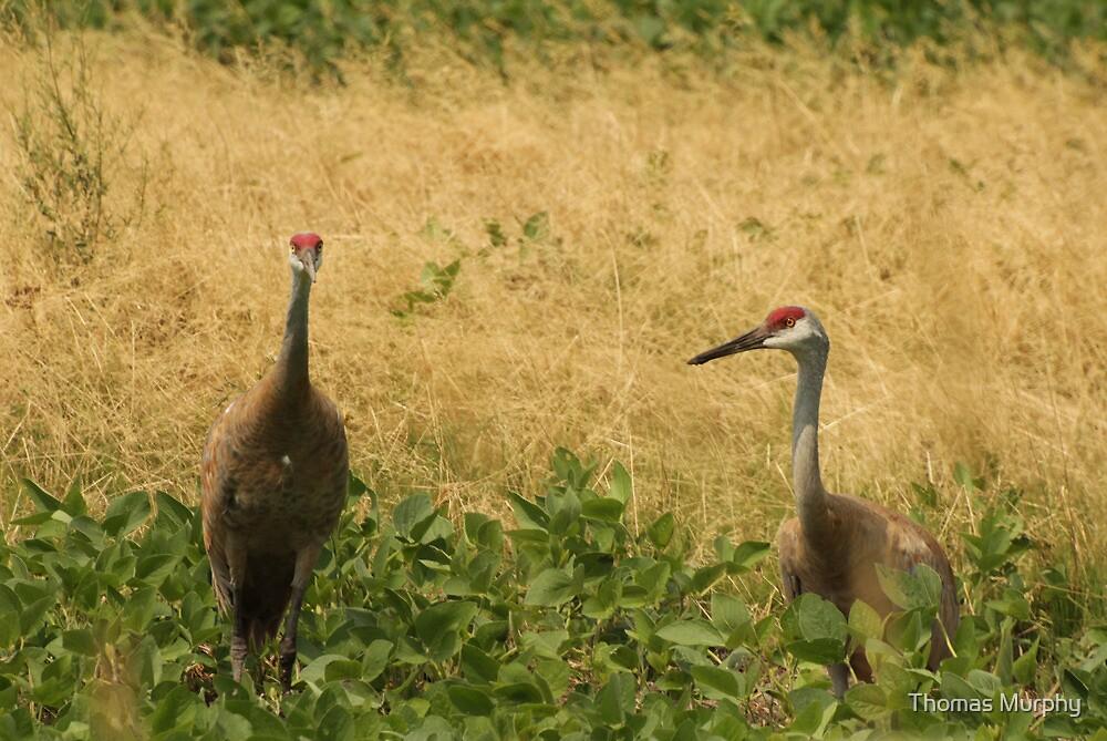 Pair of Sandhill Cranes by Thomas Murphy