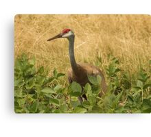 Sandhill Crane Skirted in Green Leaf Canvas Print