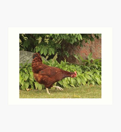 Red Rock Chicken Art Print