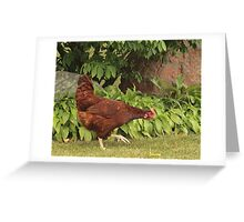 Red Rock Chicken Greeting Card