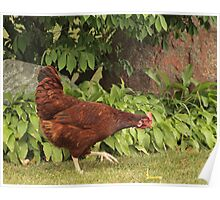Red Rock Chicken Poster