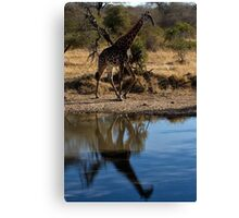 Tall Reflection Canvas Print