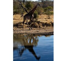 Tall Reflection Photographic Print