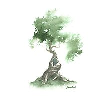 Little Zen Tree 676 Photographic Print
