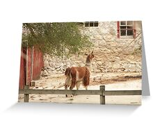 Llama in Courtyard Greeting Card