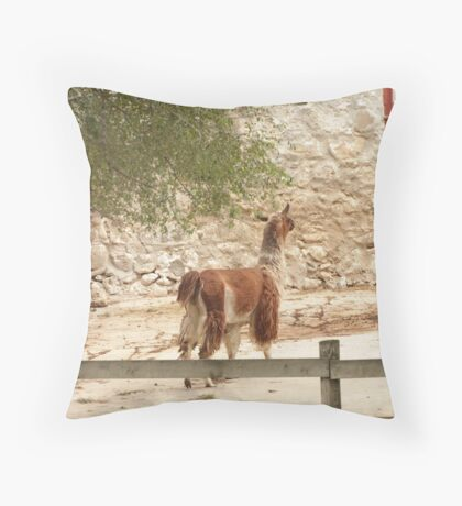 Llama in Courtyard Throw Pillow